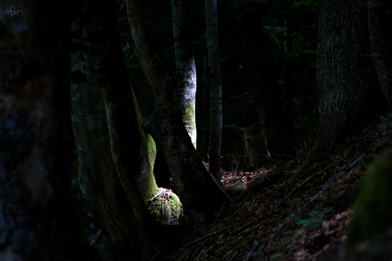 Une belle lumière à travers la forêt sur le chemin des Pères à Cauterets.
